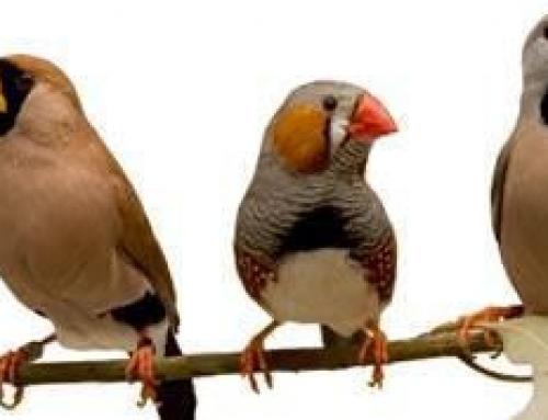 Finch Care